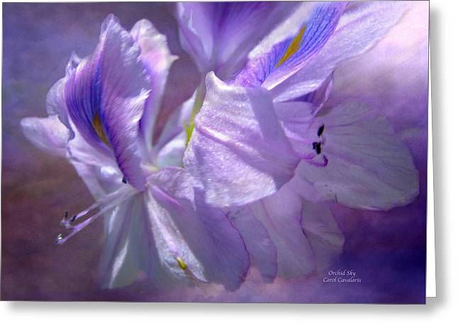 Orchids Art Greeting Cards - Orchid Sky Greeting Card by Carol Cavalaris