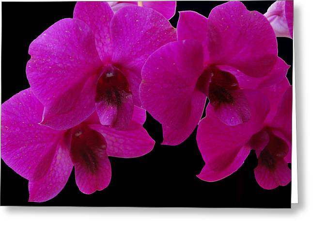 Orchid Song Greeting Card by Aimee L Maher Photography and Art Visit ALMGallerydotcom