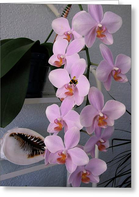 Easter Pictures Greeting Cards - Orchid Splendor Greeting Card by Adele Moscaritolo