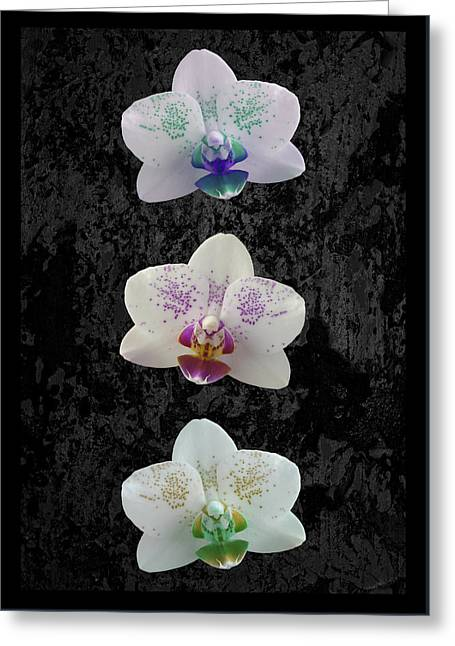 Orchid Trio Greeting Card by Hazy Apple