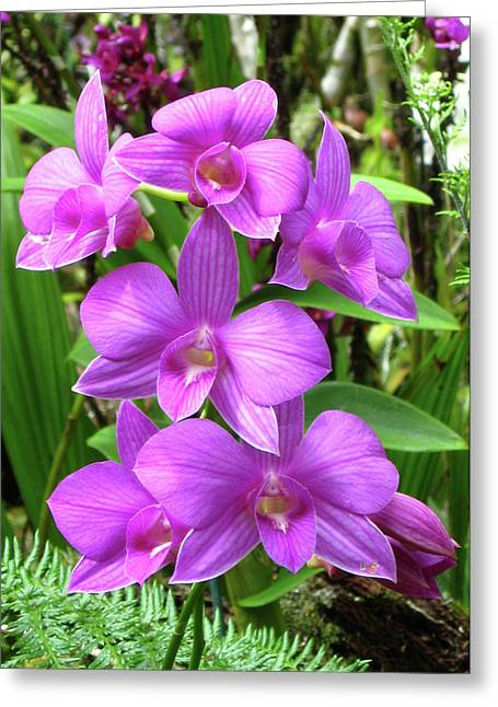 Kerri Ligatich Greeting Cards - Orchids - Purple Greeting Card by Kerri Ligatich