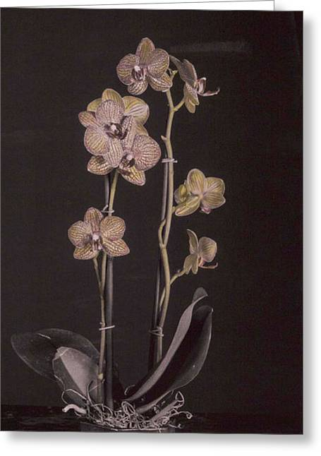 Pink Flower Prints Pyrography Greeting Cards - Orchids 2 Greeting Card by Esther Osborn