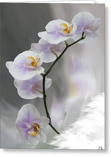 Kevin Sherf Greeting Cards - Orchids 2010 Greeting Card by Kevin  Sherf