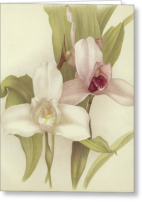 Orchids Greeting Card by English School