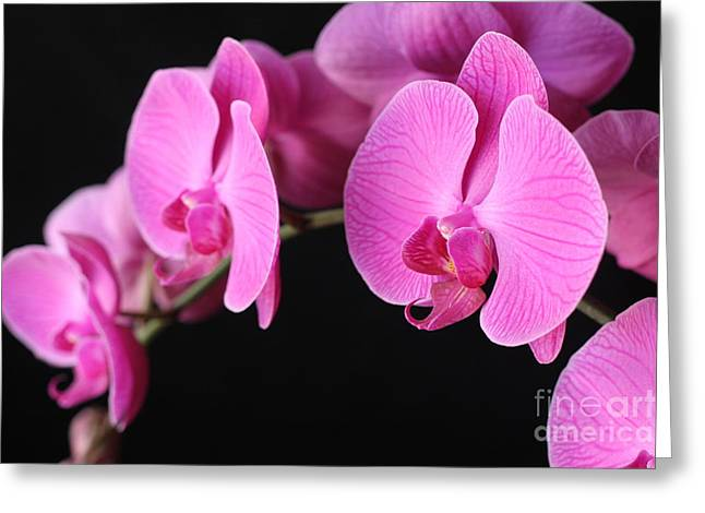 Orchids In Bloom Greeting Card by Angie Bechanan