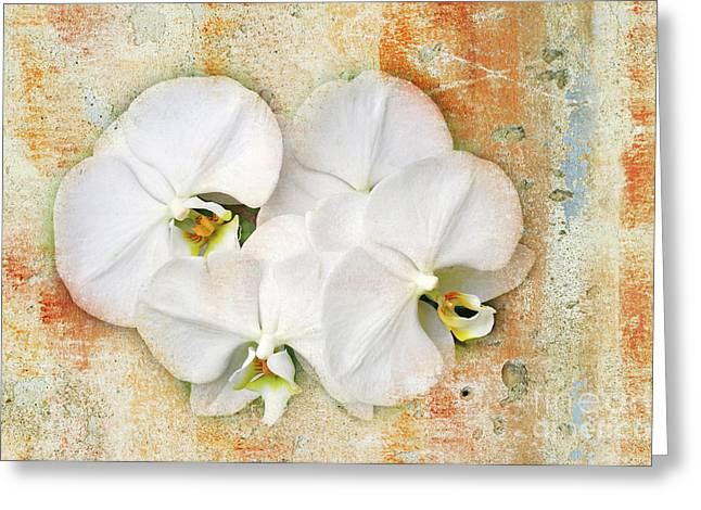 Orchids Digital Art Greeting Cards - Orchids Upon The Rough Greeting Card by Andee Design