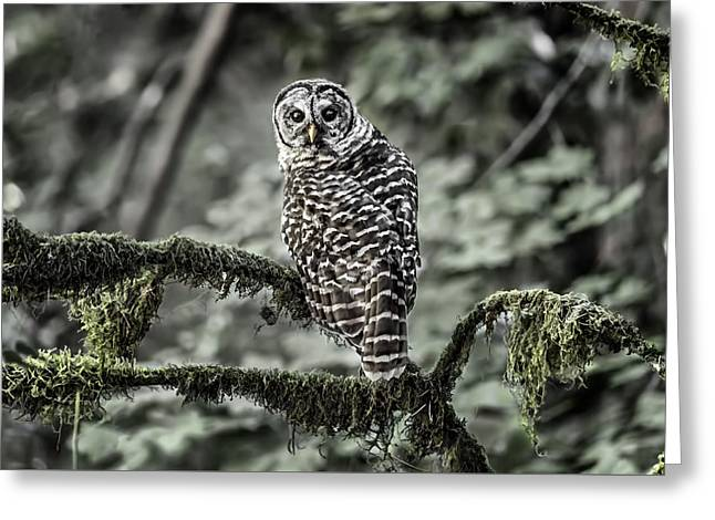 Moss Greeting Cards - Oregon Barred Owl D5002 Greeting Card by Wes and Dotty Weber