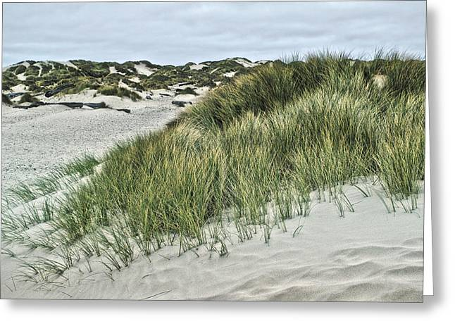 Sand Patterns Greeting Cards - Oregon Dunes 2 Greeting Card by Bonnie Bruno