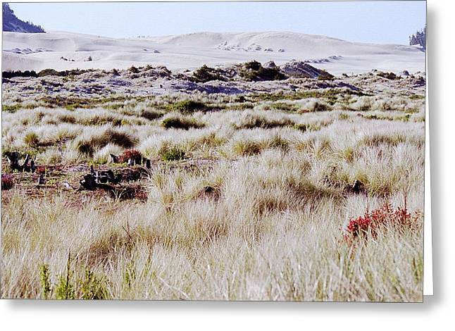 Oregon Dunes National Recreation Area Greeting Cards - Oregon Dunes 6 Greeting Card by Eike Kistenmacher