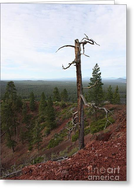 Deschutes Greeting Cards - Oregon Landscape - Confused Tree at Lava Butte Greeting Card by Carol Groenen