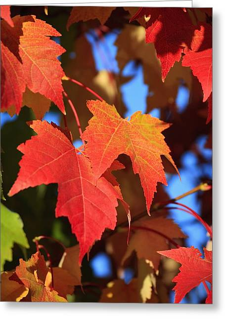 Colors Of Autumn Greeting Cards - Oregon, United States Of America Leaves Greeting Card by Craig Tuttle