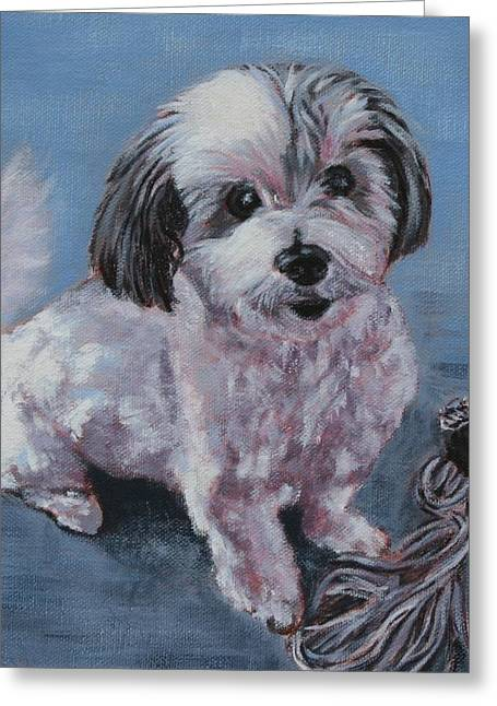 Toy Dog Greeting Cards - Oreo and Monkey Greeting Card by Wendy Whiteside