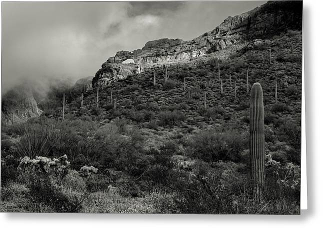 Organ Pipe Arch Greeting Card by Joseph Smith