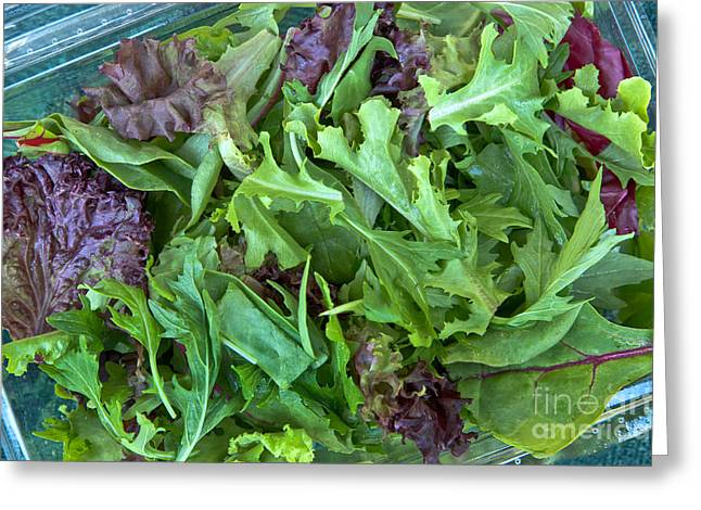 Lettuce Greeting Cards - Organic Baby Lettuce Salad Mix Greeting Card by Inga Spence