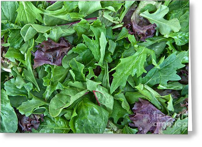 Organically Greeting Cards - Organic Baby Lettuce Spring Mix Greeting Card by Inga Spence