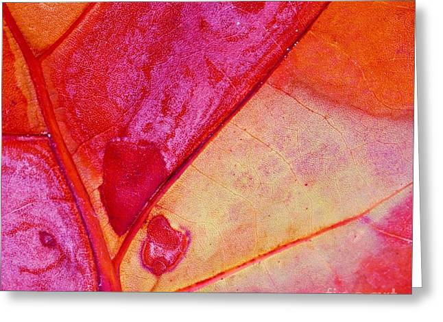 Organic Red Greeting Card by John Clark