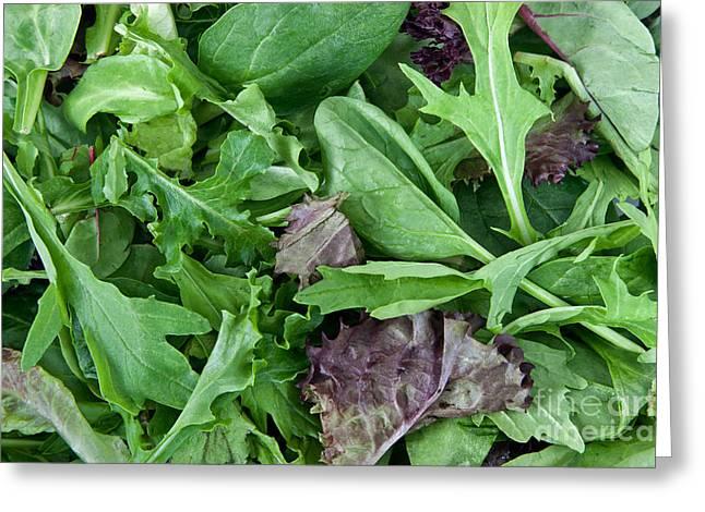 Organically Greeting Cards - Organic Spring Mix Salad Mix Greeting Card by Inga Spence