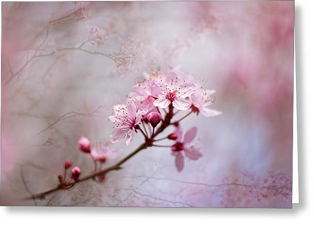 Oriental Blossom Greeting Card by Jacky Parker