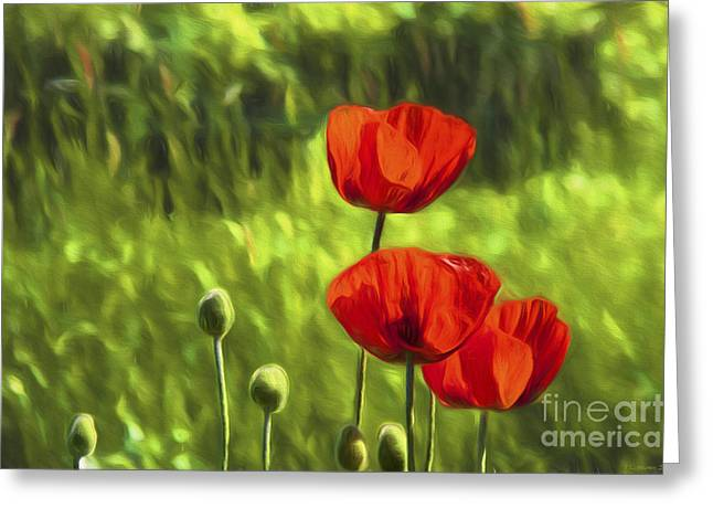 Salo Greeting Cards - Oriental poppies Greeting Card by Veikko Suikkanen