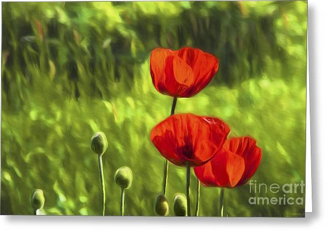 Oriental Poppies Greeting Card by Veikko Suikkanen