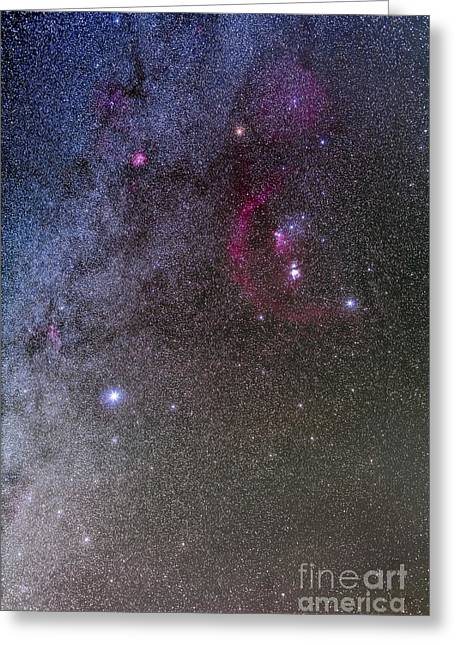 Orionis Greeting Cards - Orion And Canis Major With The Dog Star Greeting Card by Alan Dyer