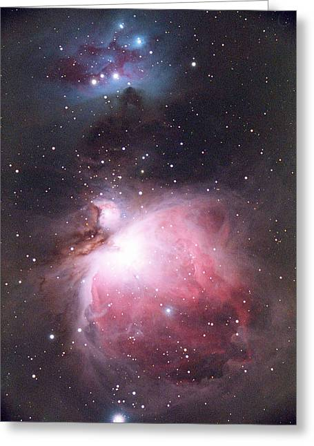 Starbirth Greeting Cards - Orion Nebula Greeting Card by Chris Madeley