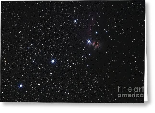 Horsehead Greeting Cards - Orions Belt, Horsehead Nebula And Flame Greeting Card by Luis Argerich