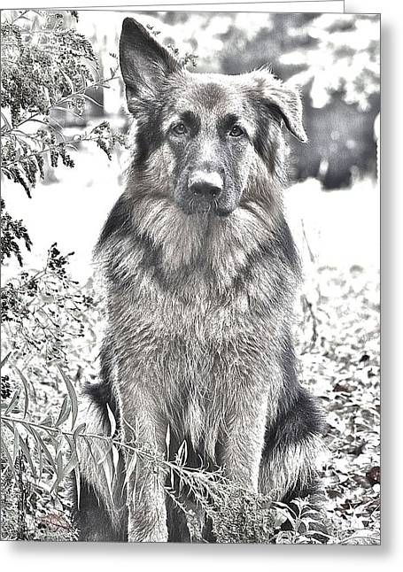 Puppies Photographs Greeting Cards - Oskar Black and White Greeting Card by Danielle Sigmon