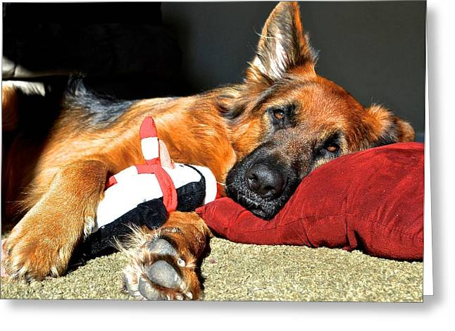 Toy Dog Greeting Cards - Oskar Relaxing Greeting Card by Danielle Sigmon