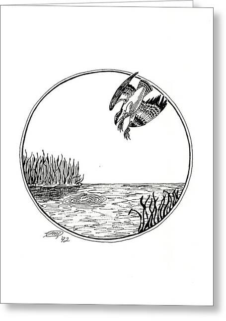 Osprey Drawings Greeting Cards - Osprey Greeting Card by Donna Forsyth
