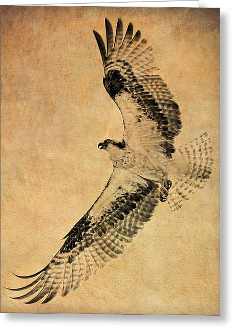 Soaring Falcon Greeting Cards - Osprey Leather Works Greeting Card by Athena Mckinzie