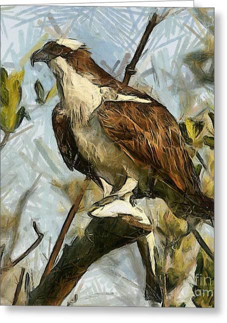 Osprey Drawings Greeting Cards - Osprey Greeting Card by Murphy Elliott