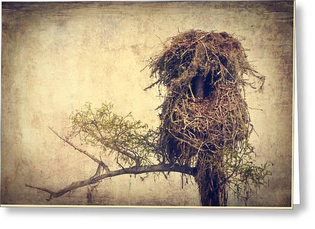 Osprey Nest Greeting Card by Debra Forand