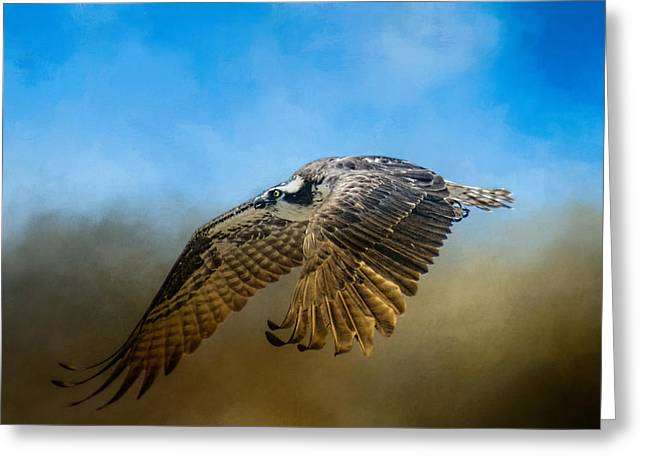 Tennessee River Greeting Cards - Osprey Over Pickwick Greeting Card by Jai Johnson