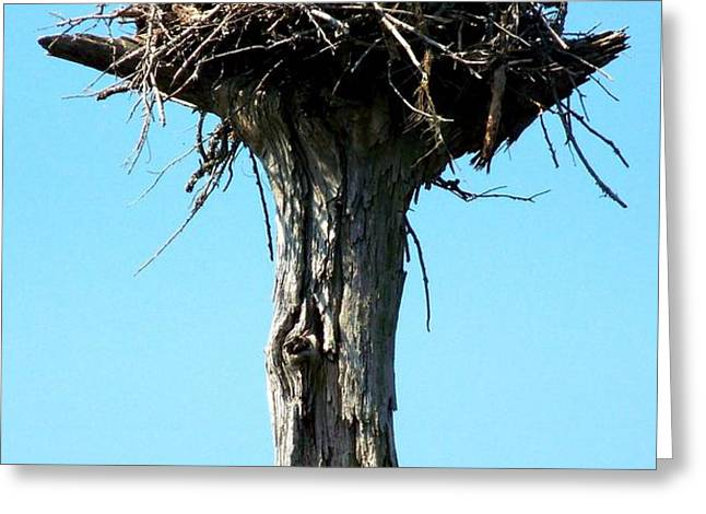 Osprey Point Greeting Card by KAREN WILES