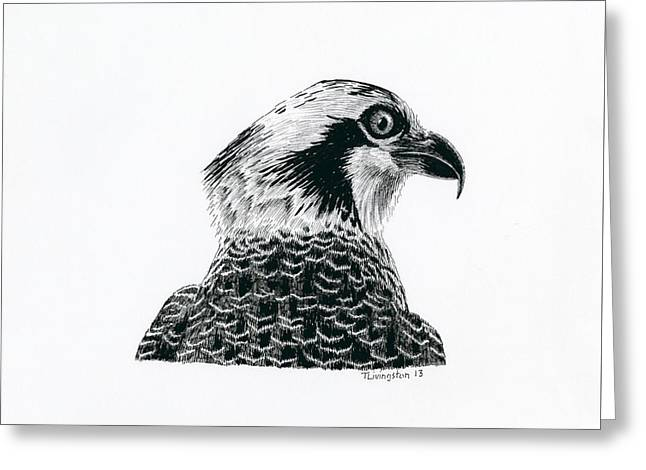 Osprey Drawings Greeting Cards - Osprey Portrait Greeting Card by Timothy Livingston