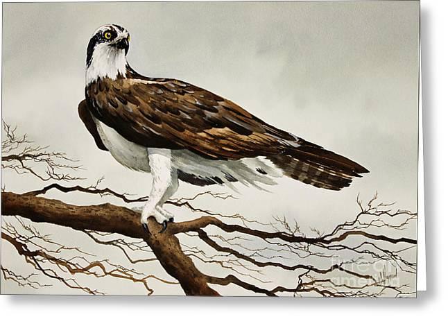 Osprey Sea Hawk Greeting Card by James Williamson