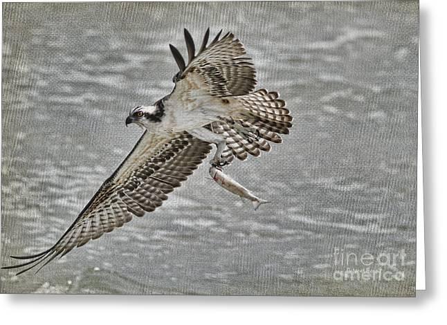 Osprey Florida Greeting Cards - Osprey With Breakfast Greeting Card by Deborah Benoit