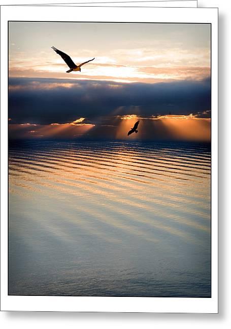 Osprey Florida Greeting Cards - Ospreys Greeting Card by Mal Bray