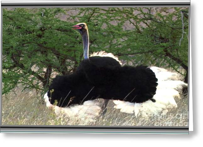 Award Mixed Media Greeting Cards - Ostrich dance inviting for a mating session Greeting Card by Navin Joshi