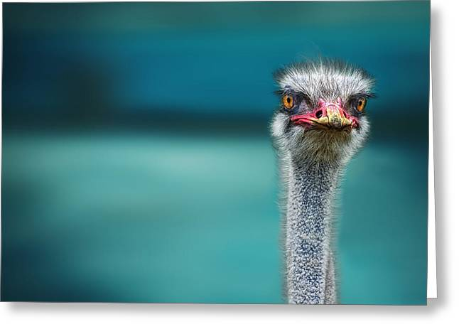 Birds Eye Greeting Cards - Ostrich Protecting Two Poor Chicken From The Wind Greeting Card by Piet Flour
