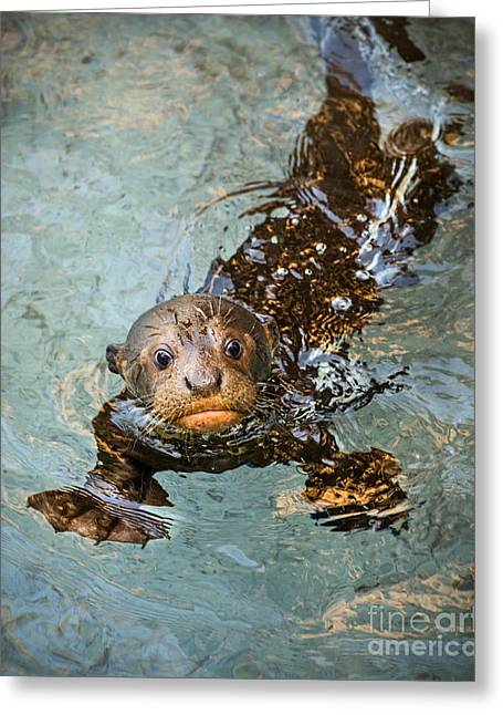 Otter Pup Greeting Card by Jamie Pham