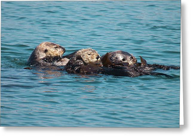 Morro Bay Ca Greeting Cards - Otter Trio Greeting Card by Nicole Riley