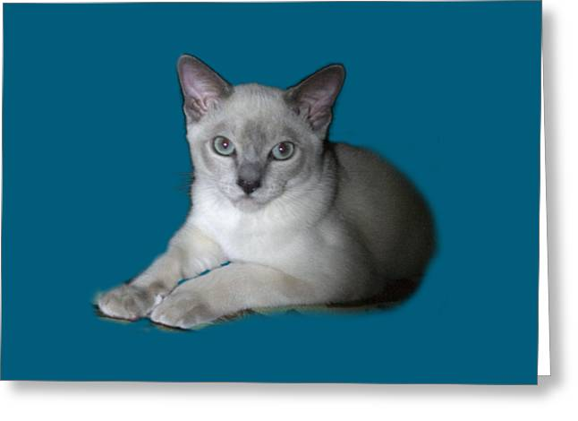 Tonkinese Cat Greeting Cards - Our Little Angel Greeting Card by Linda Phelps