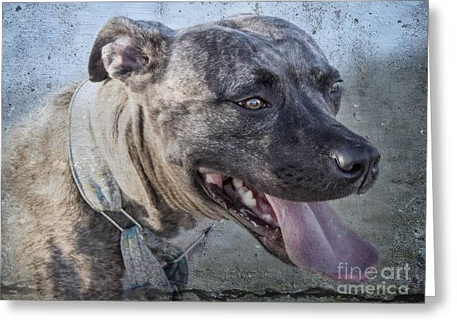 Dogs Digital Greeting Cards - Out for a Look-See Greeting Card by Georgianne Giese