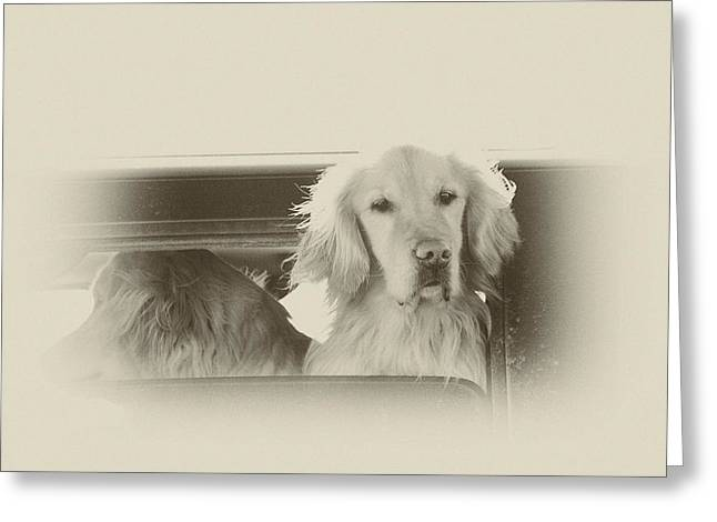 Doggies Greeting Cards - Out For A Ride Greeting Card by Karol  Livote