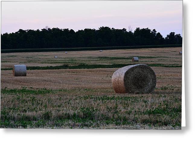 Hay Bales Greeting Cards - Out in the Fields Greeting Card by Richard Andrews