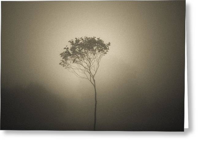 Coldness Photographs Greeting Cards - Out of the gloom Greeting Card by Chris Fletcher