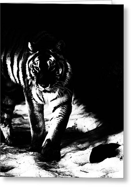 The Tiger Greeting Cards - Out Of The Shadows Greeting Card by Karol  Livote