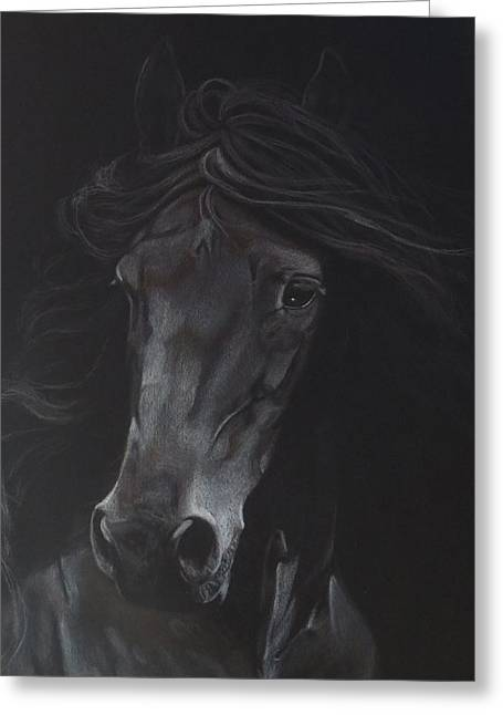 The Horse Greeting Cards - Out of the Shadows Greeting Card by Rachel Beck